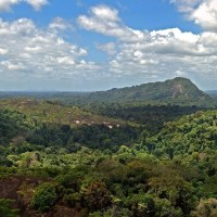 These are the world's most tree-covered countries; Katharine Rooney; WeForum