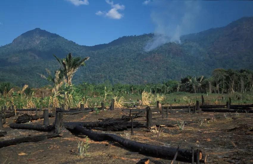 Hay informes sobre el aumento de la deforestación durante la pandemia de COVID-19.