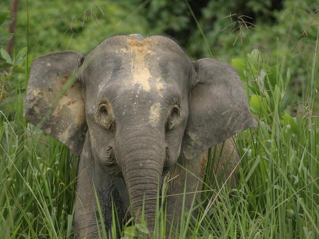 ethical elephant encounters pygmy elephant takingtotheopenroad peggytee