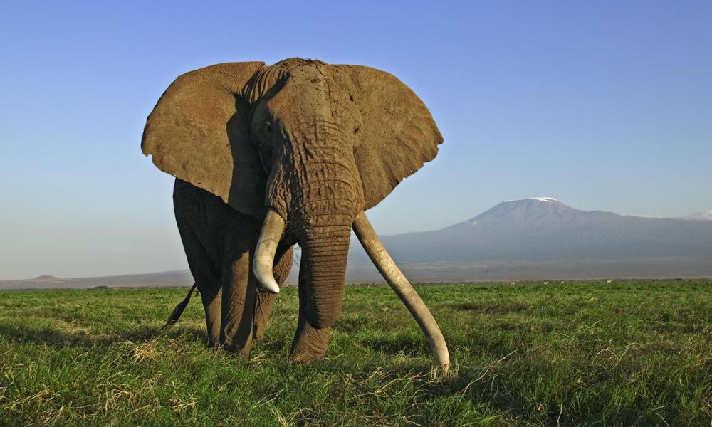 https://i0.wp.com/assets.worldwildlife.org/photos/4690/images/story_full_width/African-Elephant_112368-SWC.jpg