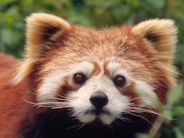 Image Result For Cute Rainforest Animal