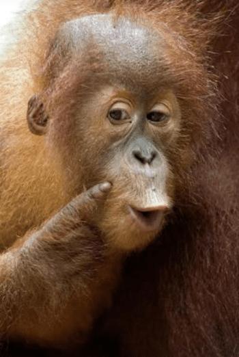Normal 1541195992 2018 07 30 10 02 03 Cute Monkey Google Search