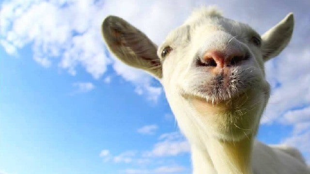 Live Fall Wallpaper For Pc Goat Simulator 4 Player Goatmatch Ign Video