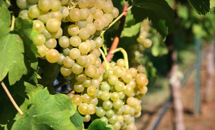 $10 for Winery Tours in Burleson