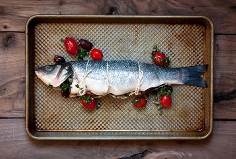 fish basics the beginner