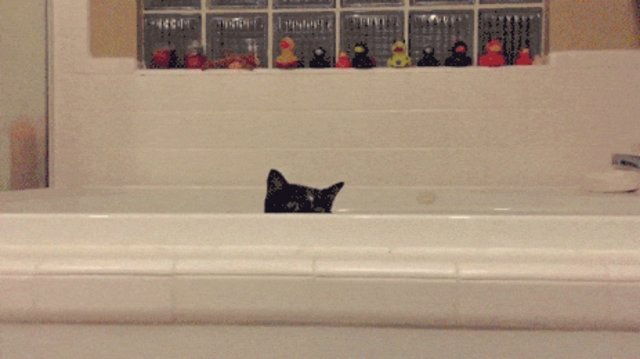 why cats love bathtubs