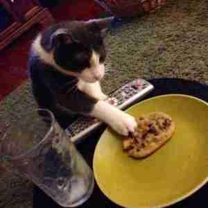 cat Sunday stealing humor