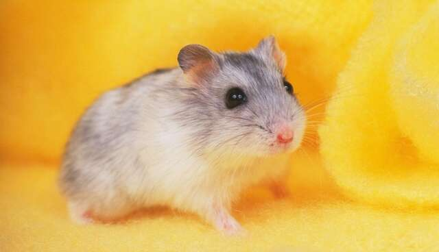 5 things your hamster