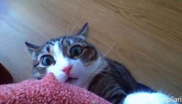 why cute cat videos