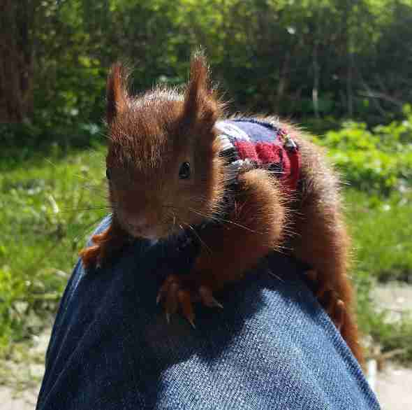 baby squirrel abandoned by
