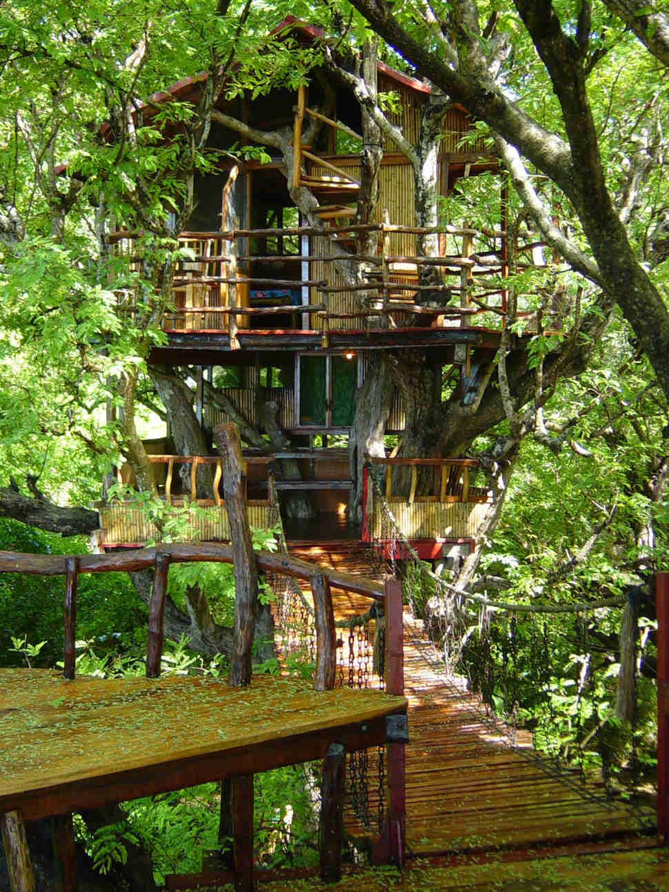 Best Treehouse Hotels in the World  Thrillist