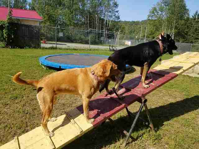perros en balancín