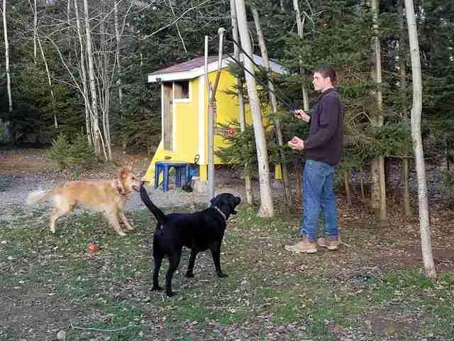 perros jugando a buscar