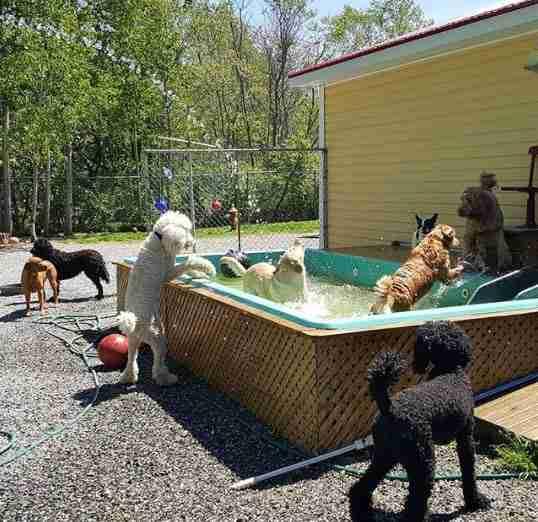 perros en una piscina