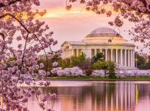 Cherry Blossom Festival DC 2018: When to Expect Peak Bloom ...