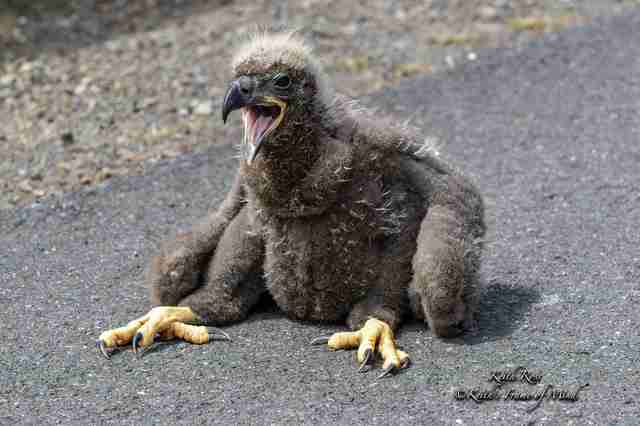 woman finds bald eagle