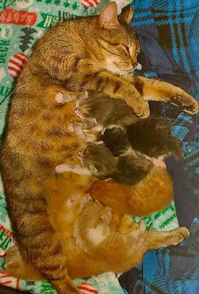 Stray cat reunites with kittens in shelter