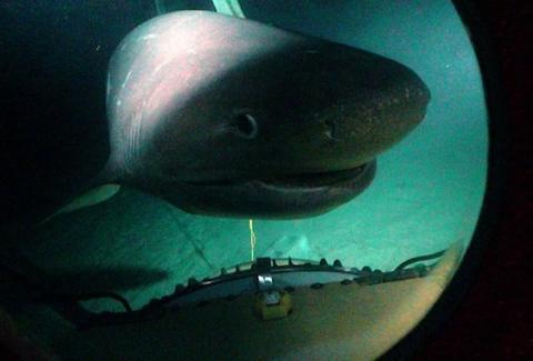 Deep Submarine Shark Adventures  Shark Diving 3000ft into