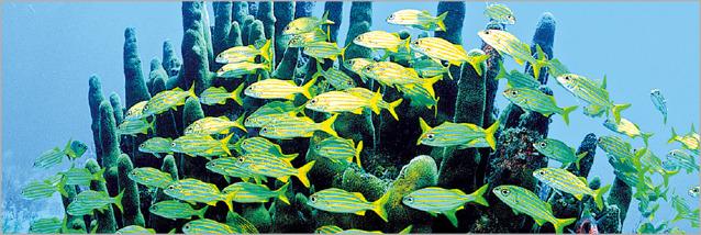 Ψάρια σε κοραλλιογενή ύφαλο
