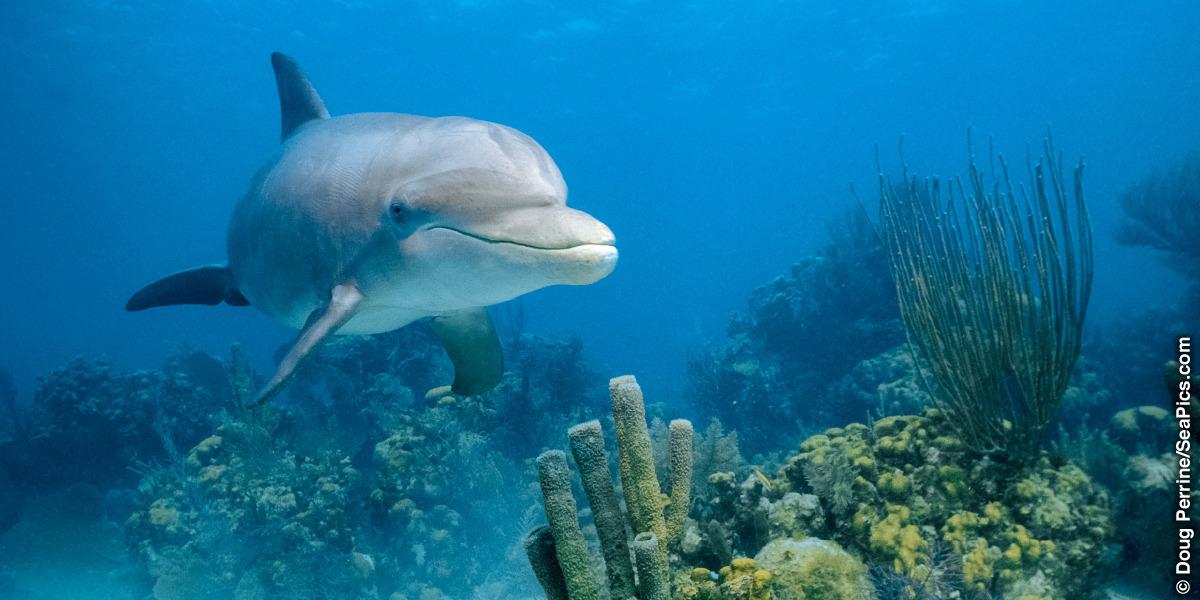 the dolphin s sonar