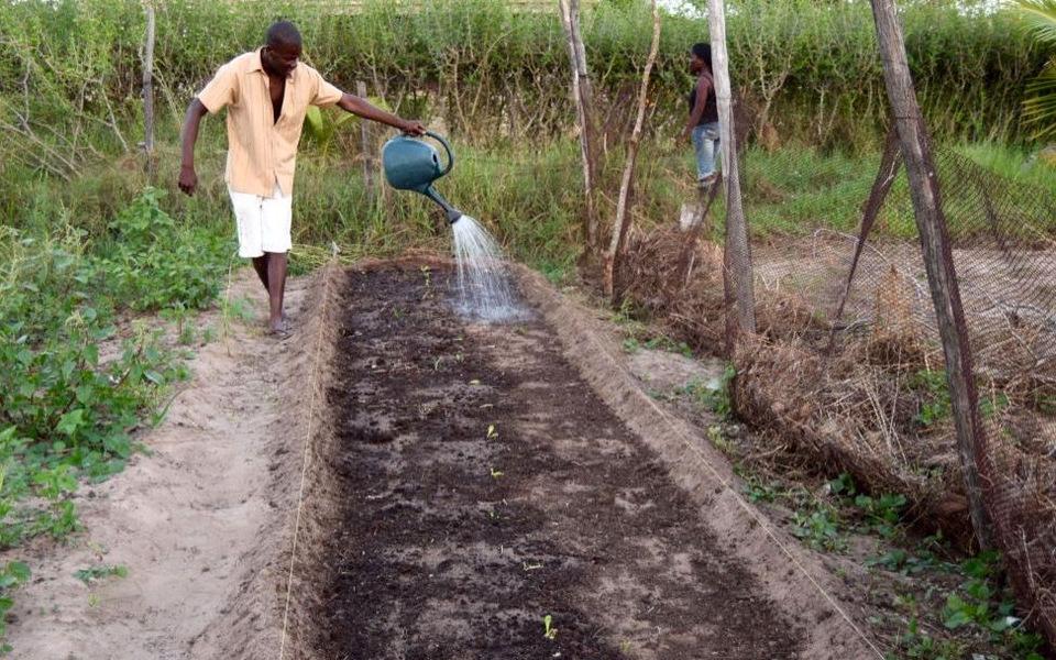 Elidio som vander sine nyplantede agurker