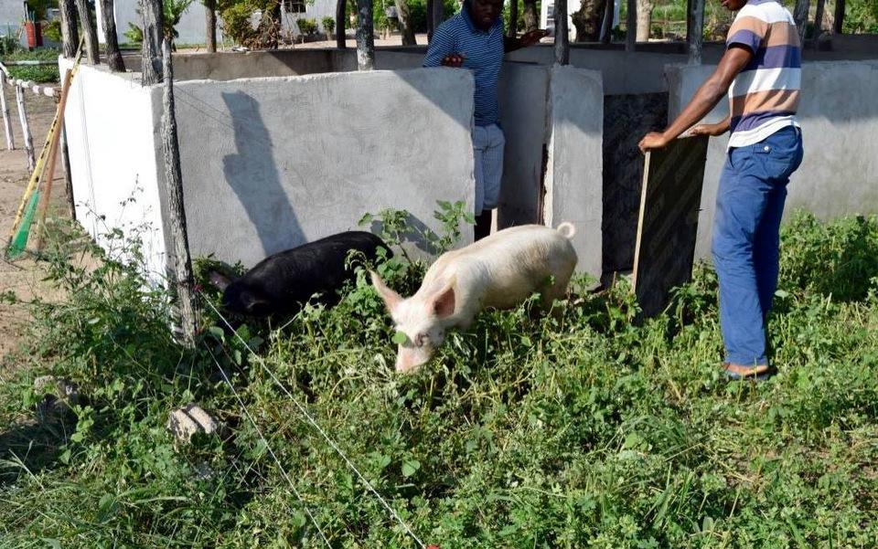 To af skolens syv grise nyder godt af alt det grønne