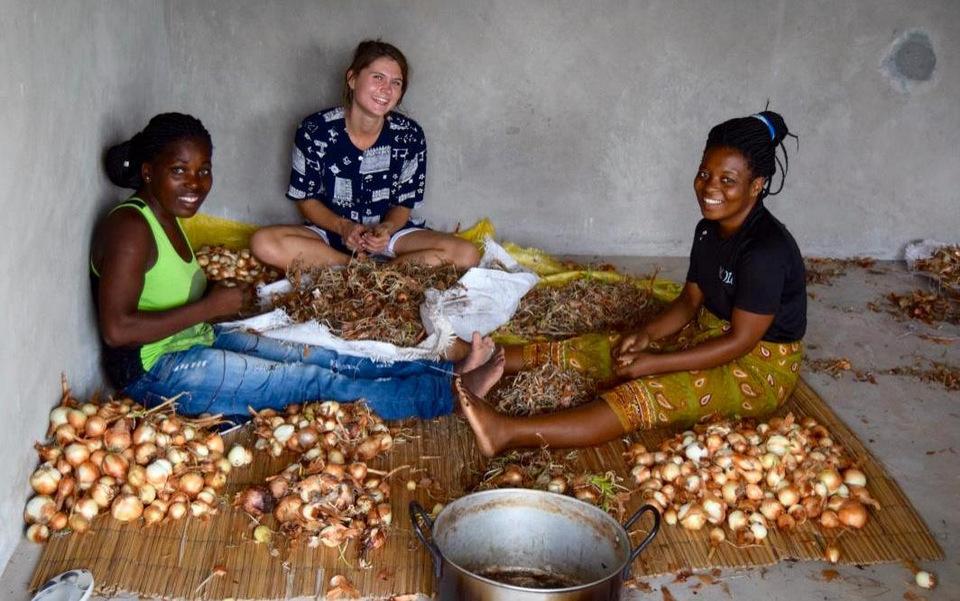 Josefina, Cecilie og Celestina sorterer årets løghøst