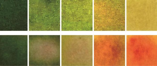 image shows various shades of green yellow and red the smart bandage goes through as it identifies and treats bacterial infection.