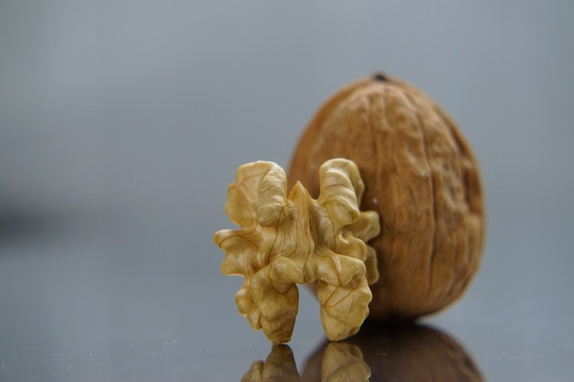 nut-1913195_1280