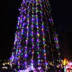 Idyllwild Christmas Tree - 6387