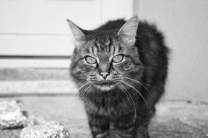 Comportement du chat