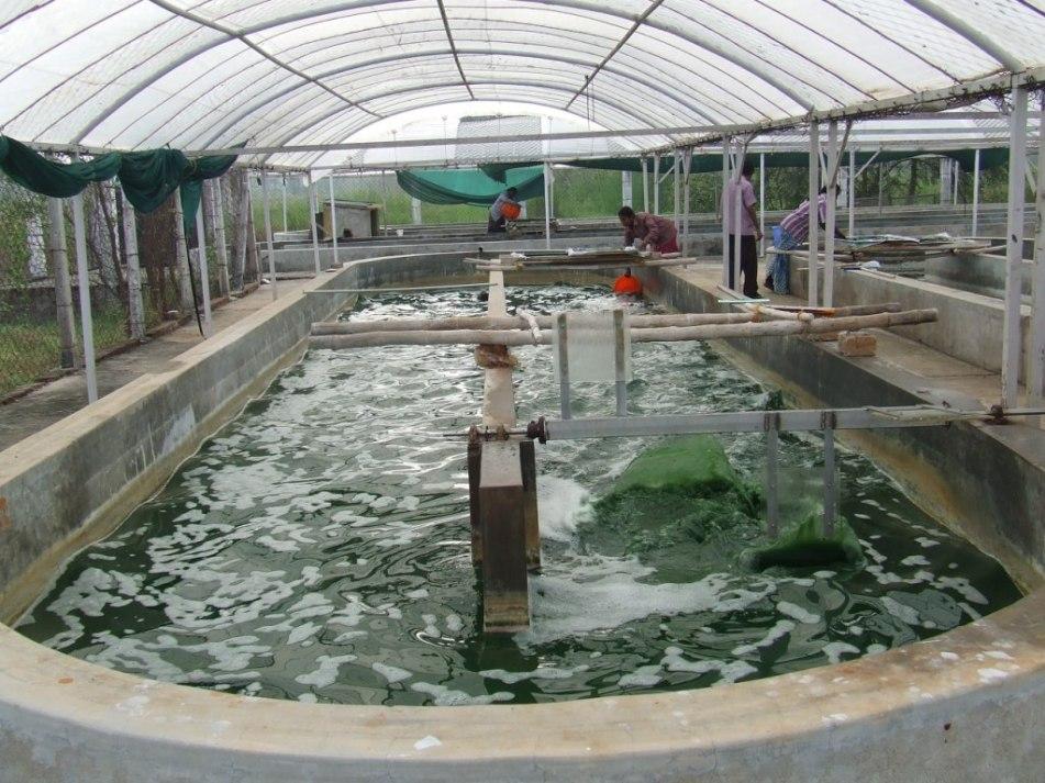 bassin C2