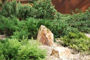 Декоративная композиция из хвойных растений в сочетании с камнями