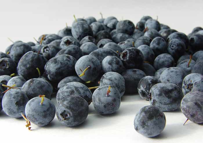 Another Weight Loss Supplement Scam – Acai Berry