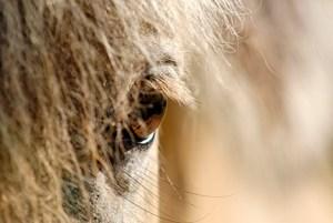horse eye for web