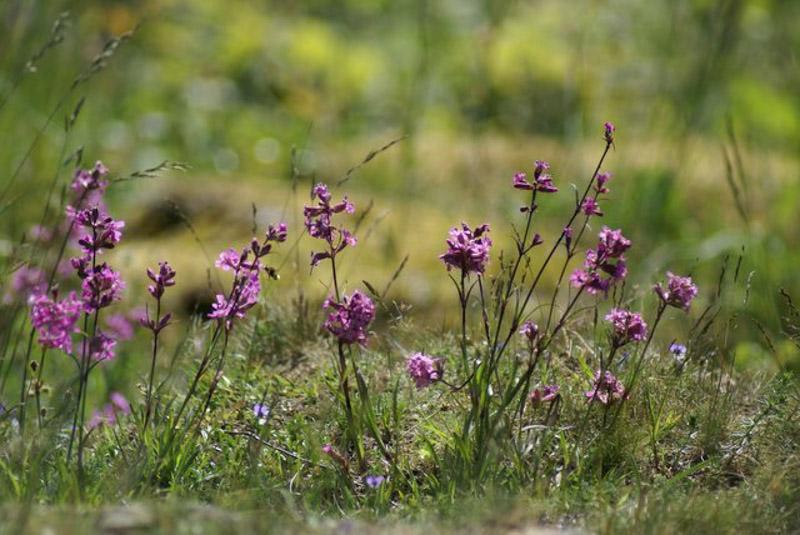 blommor_528068596_o-2
