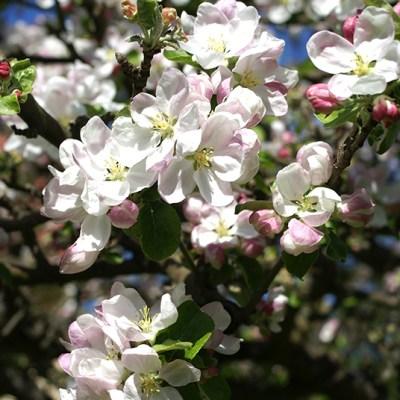 Jag längtar efter våren