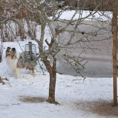 Att lära hunden dumheter och varmare inomhus.
