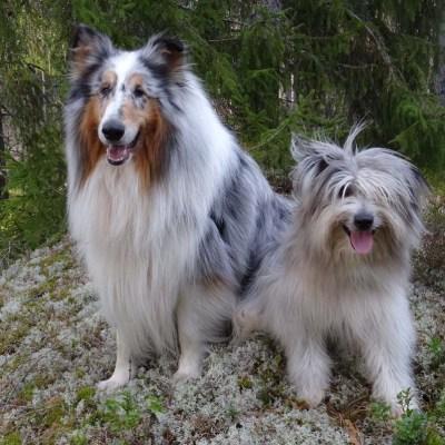 Två söta vovvar