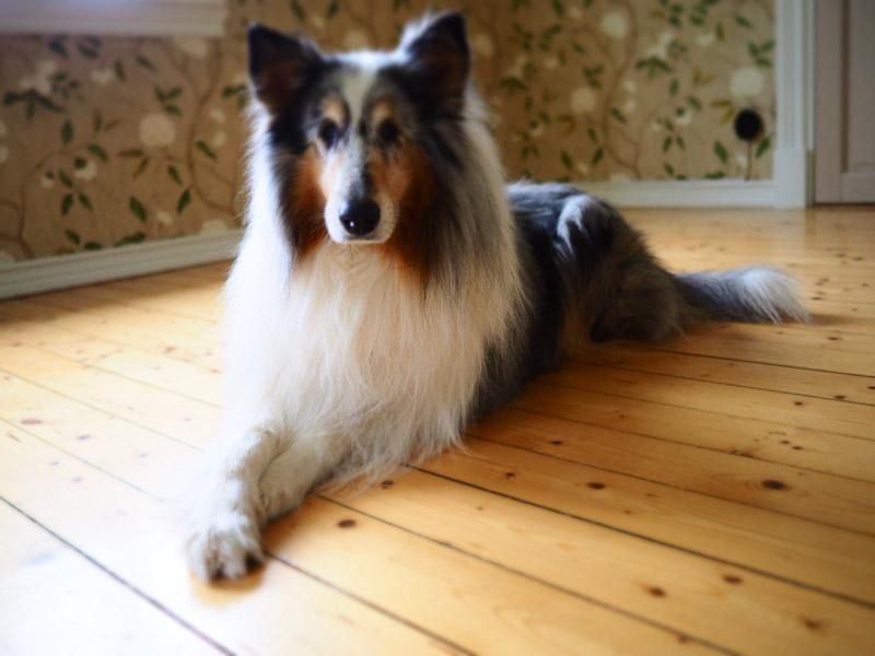 studiohund-82