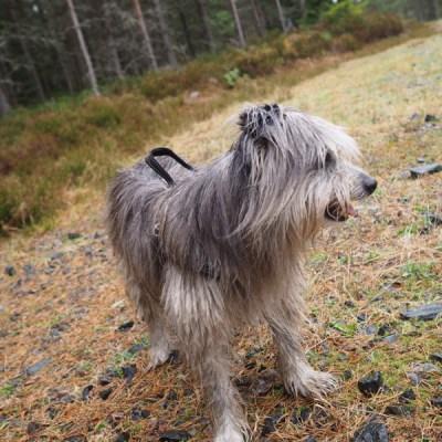 Vovvarna och jag i skogen