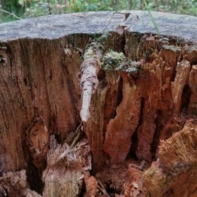 En gren – från baksidan