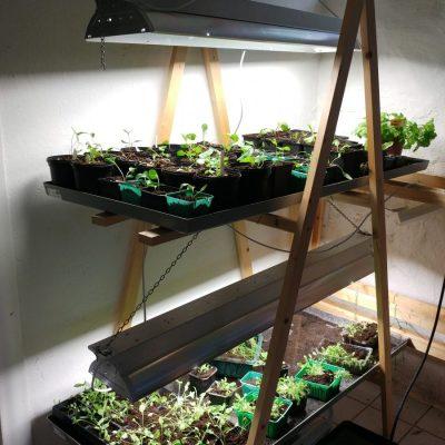 Små plantor