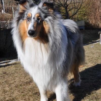Rymmarhund