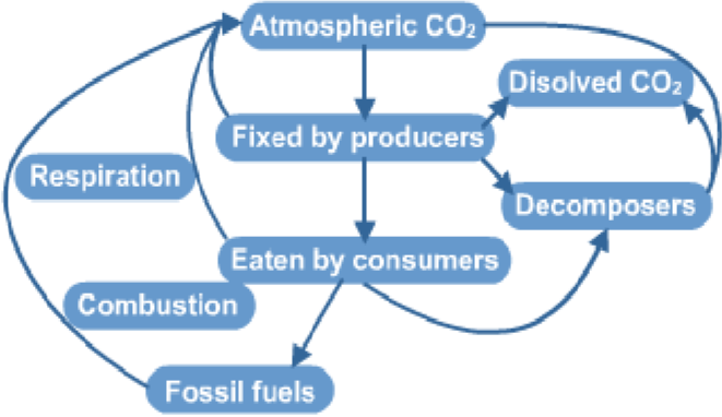 The Carbon Cycle A Biology