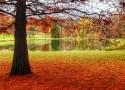 Vassar Lake