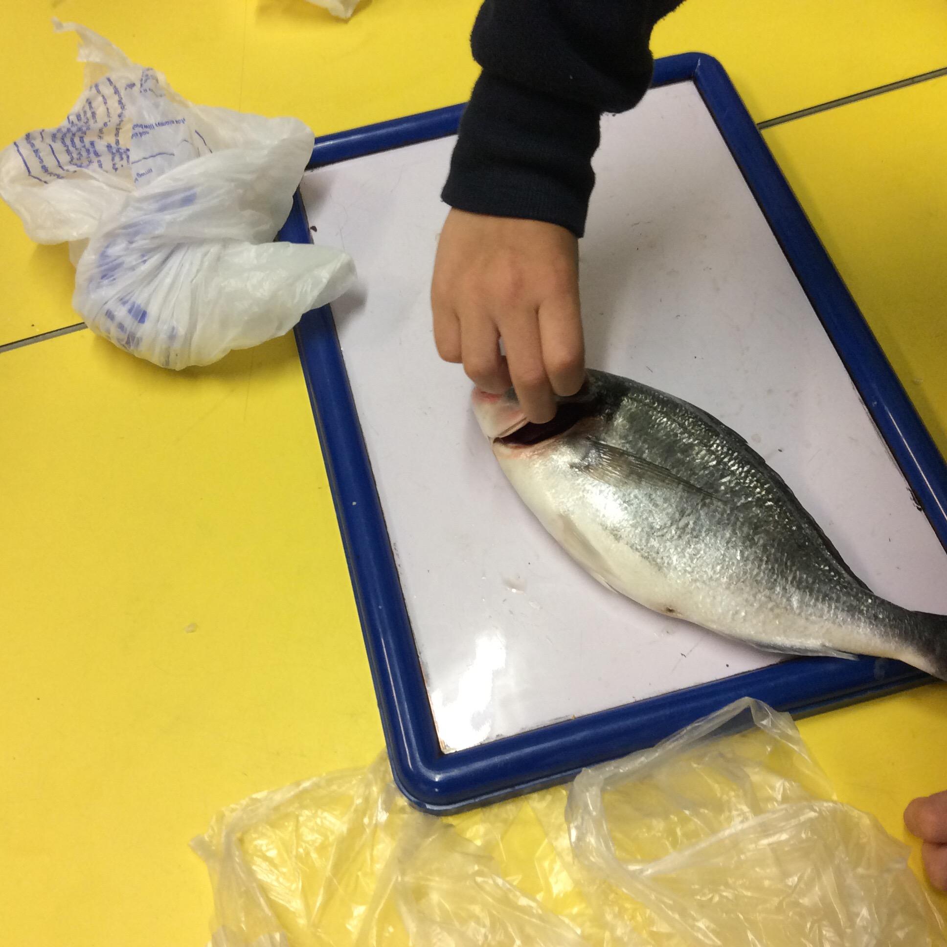 touching fish astburyreceptionblog