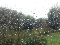 Droplets of Rain on Glass