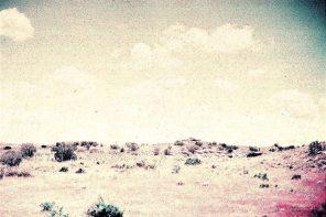 The Desert Survival Series/ La serie de la sobrevivencia del desierto* (excerpt)