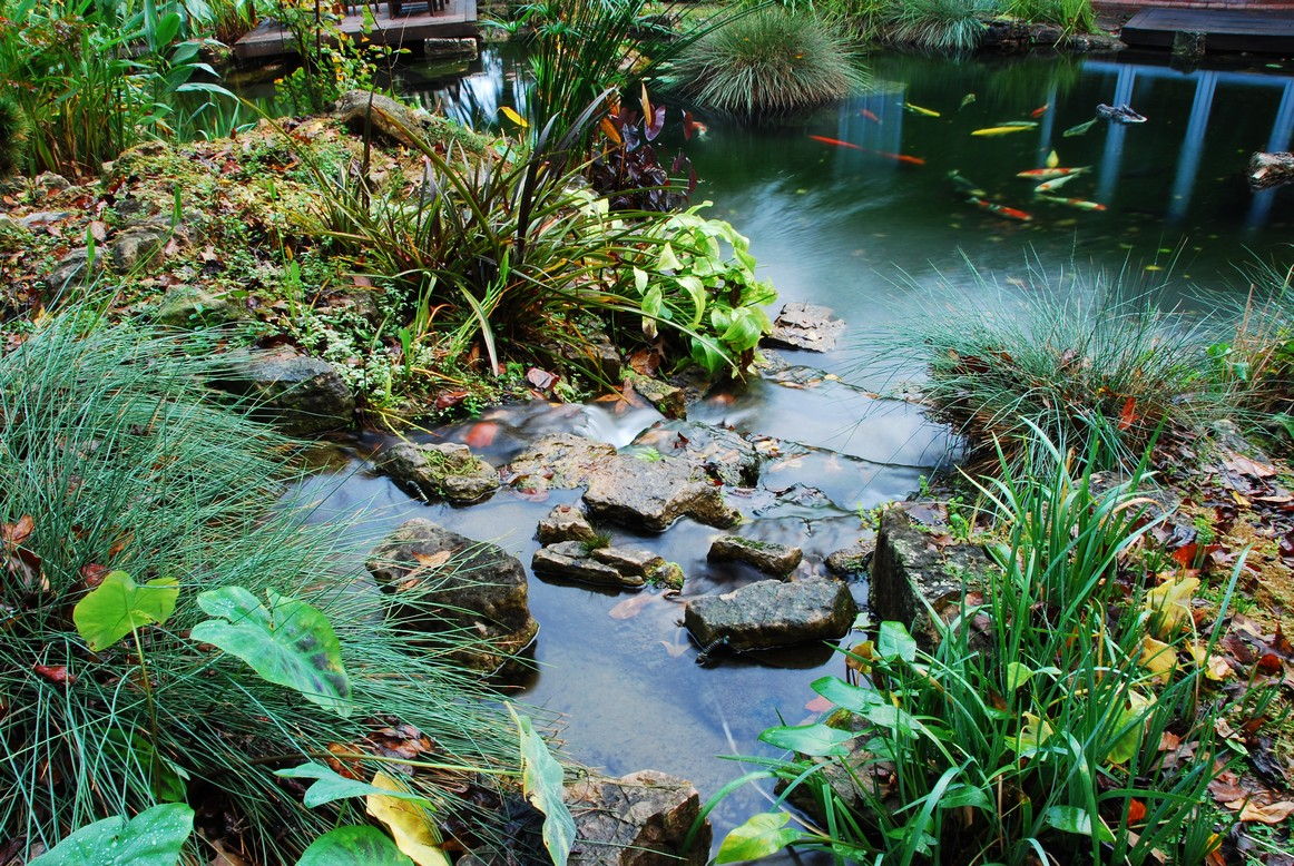 3d Koi Pond Live Wallpaper Koi Filters Amp Koi Pond Systems With Self Cleaning Filters